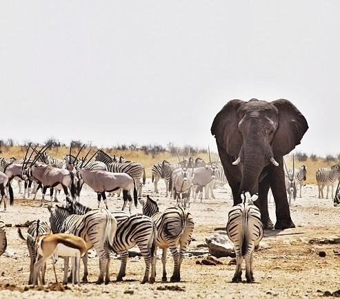 The Wildlife & Safari Travel Show returns to Harrogate this autumn