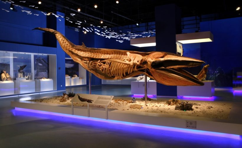 The preserved minke whale coming to Harrogate Convention Centre this autumn