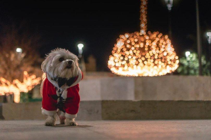 A dog in a santa outfit